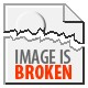 12 Blue Gold Partridge Large Fowl Brahma Chicks
